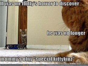 "It was mr fluffy's horror to discover  he was no longer  mommy's olny ""special kittykinz"""