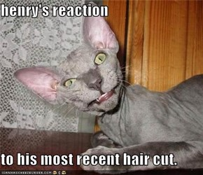 henry's reaction  to his most recent hair cut.