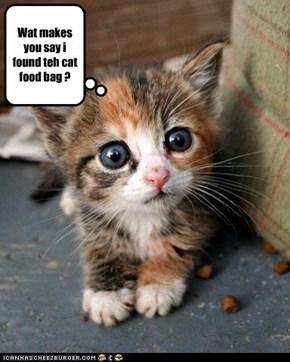 Wat makes you say i found teh cat food bag ?