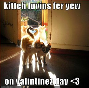 kitteh luvins fer yew  on valintinez day <3