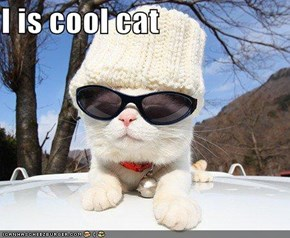 I is cool cat