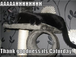 AAAAAHHHHHHHH........  Thank goodness its Caturday!