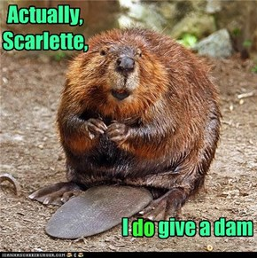 I do give a dam