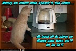 Mumzy  sez  kittenz  nawt  s'posed  ta  hab  coffee . . .
