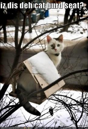 iz dis deh cat burd seat?