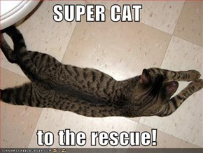SUPER CAT  to the rescue!