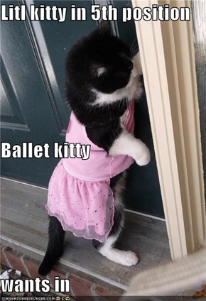 Litl kitty in 5th position Ballet kitty wants in