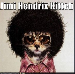 Jimi Hendrix Kitteh