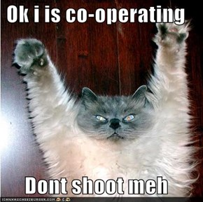 Ok i is co-operating  Dont shoot meh