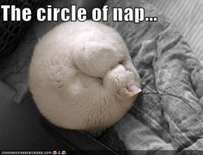 The circle of nap...