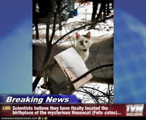 Breaking News - Scientists believe they have finally located the birthplace of the mysterious Housecat (Felis catus)...