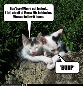 Don't cry! We're not losted...I left a trail of Meow Mix behind us.We can follow it home.