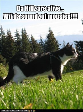 Da Hillz are alive... Wif da soundz of mousies!!!!