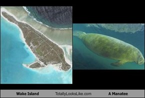 Wake Island Totally Looks Like A Manatee