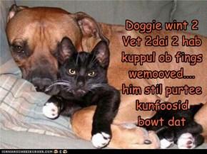 Doggie wint 2 Vet 2dai 2 hab kuppul ob fings  wemooved.... him stil purtee kunfoosid bowt dat