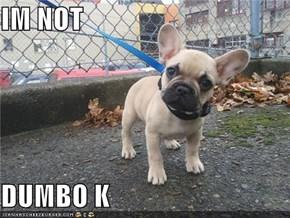 IM NOT  DUMBO K