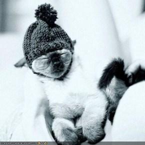 Cyoot Kitteh of teh Day: Mah Winter Hat Keeps Meh Warm n Sleepeh