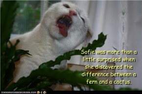 Sofie was more than a  little surprised when she discovered the difference between a fern and a cactus.