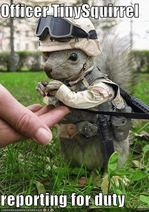 Officer TinySquirrel  reporting for duty