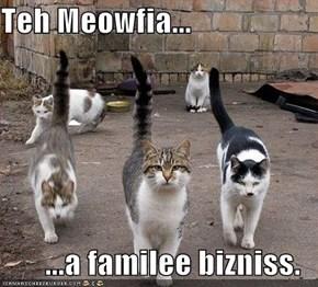 Teh Meowfia...  ...a familee bizniss.