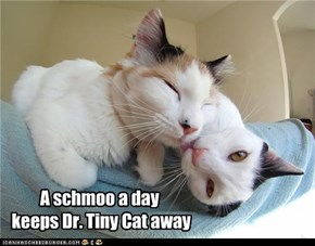 A schmoo a day  keeps Dr. Tiny Cat away