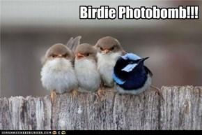 Birdie Photobomb!!!