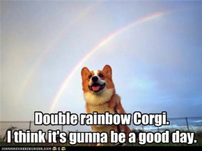Double rainbow Corgi.