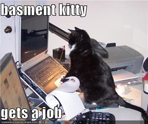 basment kitty  gets a job