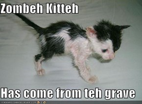 Zombeh Kitteh  Has come from teh grave