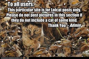 This particular site is for Lolcat posts only. Please do not post pictures in this section if they do not include a cat of some kind.                                        Thank You --