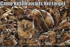 Camo Kitteh awaits his target.