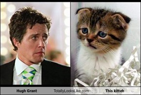 Hugh Grant Totally Looks Like This kitteh