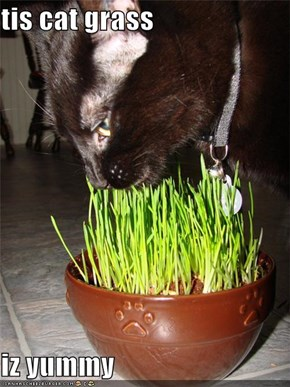 tis cat grass  iz yummy