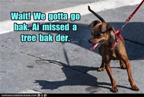 Wait!  We  gotta  go  bak.  Ai  missed  a  tree  bak  der.