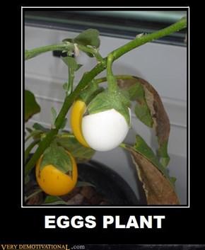 EGGS PLANT