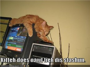 Kitteh does nawt liek dis stashun.