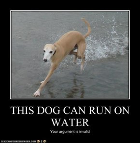 THIS DOG CAN RUN ON WATER