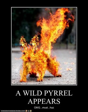 A WILD PYRREL APPEARS