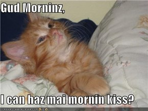 Gud Morninz,   I can haz mai mornin kiss?