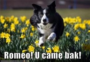 Romeo! U came bak!