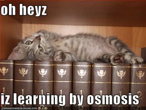 oh heyz  iz learning by osmosis