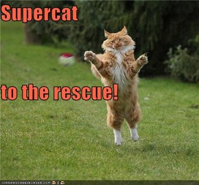 Supercat to the rescue!