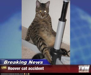 Breaking News - Hoover cat accident