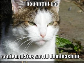 Thoughtful cat  contemplates world dominashun