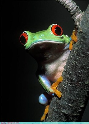 Tree frog stare!