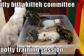 itty bitty kitteh committee  potty training session