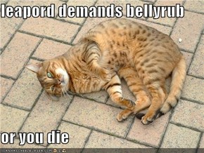 leapord demands bellyrub  or you die