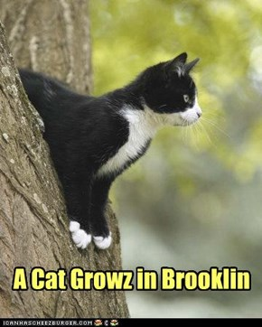 Grow stately littol kitteh!