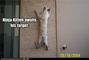 Ninja Kitteh awaits his target.