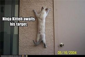 Ninja Kitteh awaits his target.